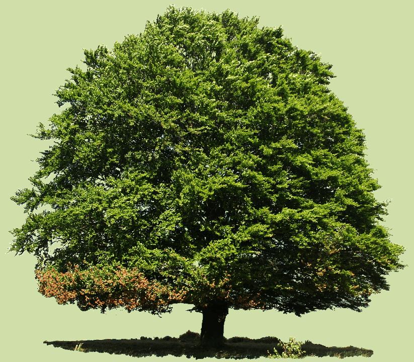 dónde sembrar árboles