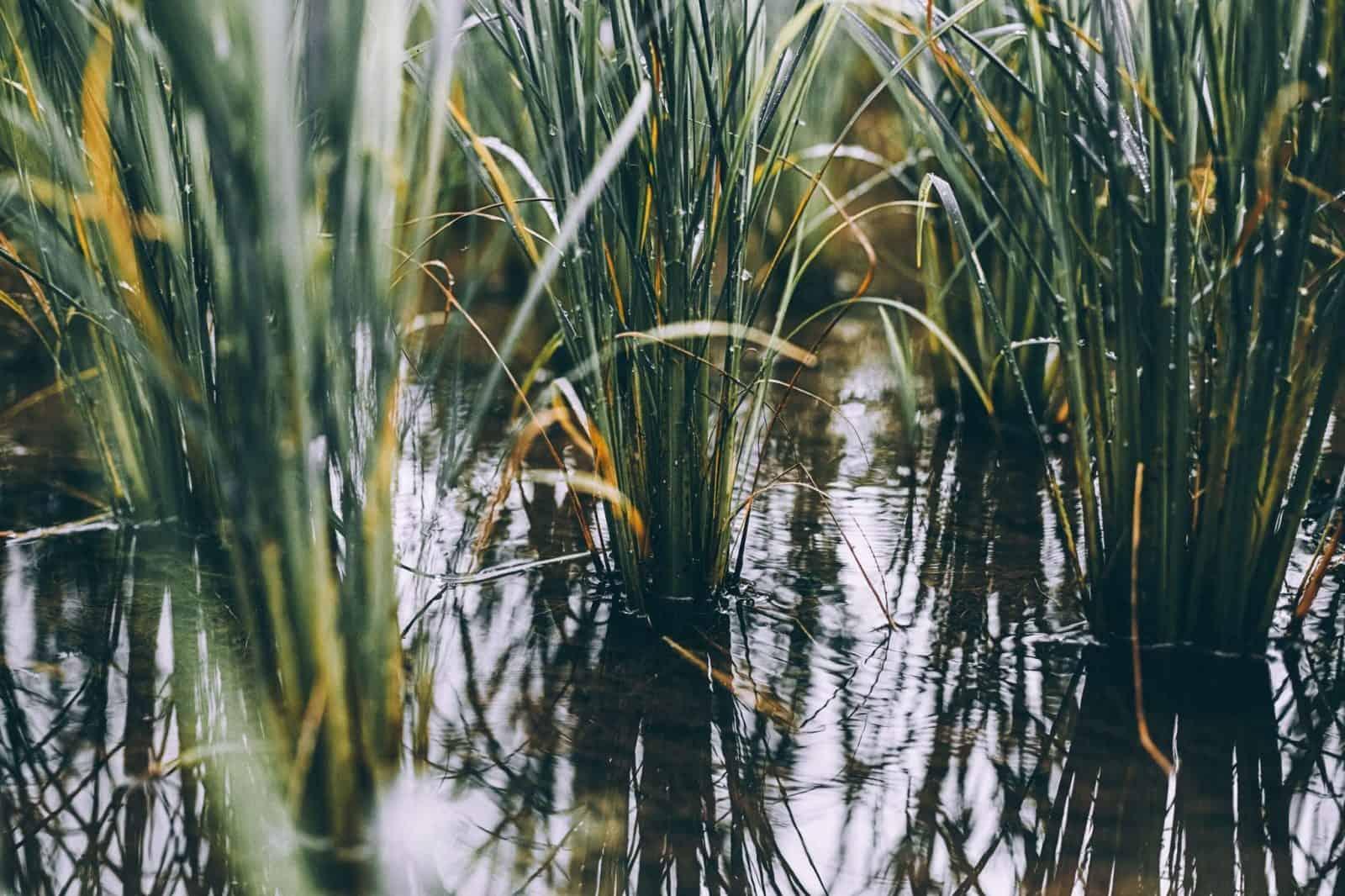 dónde sembrar arroz