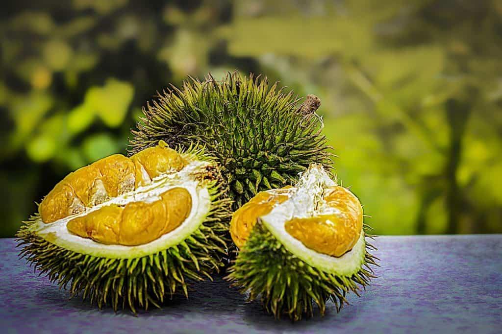 Durian fruta tropical
