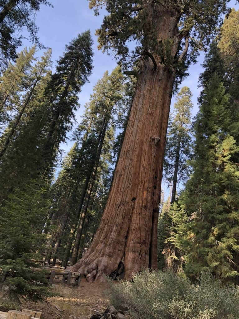 el árbol más grandel del mundo