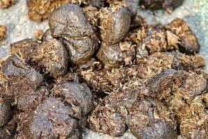Guano como fertilizante