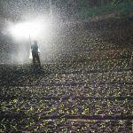 ¿Qué es el Lixiviado? ¿Para qué se utiliza? ¿En qué se puede beneficiar mi Huerto y la Agricultura?