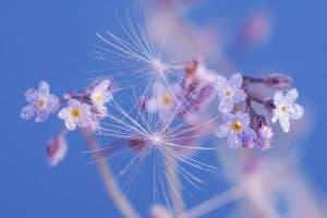 flor de mayo plantas tropicales