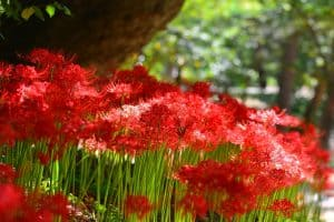 Características de la Flor Eléctrica