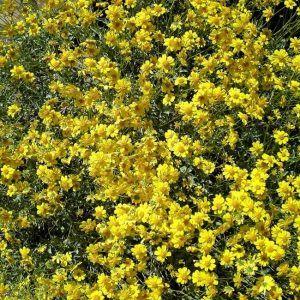 flores de incienso