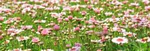 Flores de primavera listado