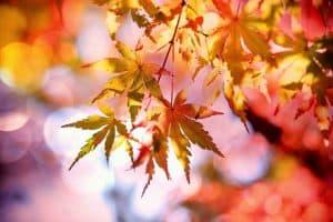 Flores de otoño cuidados