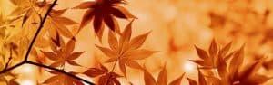 Características de las flores de otoño