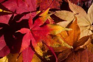 Significado de las flores de otoño