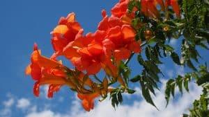 Significado de las Flores Híbridas
