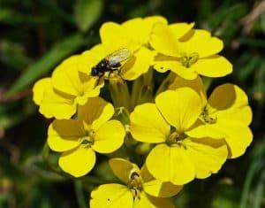 Características de las Flores Llamativas
