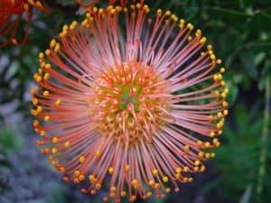 Significado de las Flores Llamativas