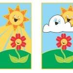 La Fotosíntesis, Guía Completa: ¿Qué es y cómo se produce? ¿En que nos beneficia?