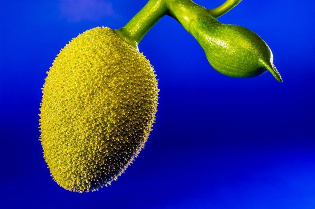 fruta de la jaca