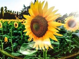 Las 20 Flores Bonitas más Comunes y Fáciles de Cultivar