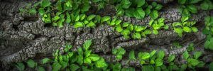 Partes de una planta: las hojas