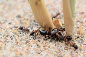 hormigas en el huerto 2