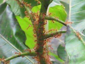 hormigas en el huerto 3