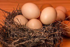 Cuánto tiempo tarda una gallina en poner un huevo