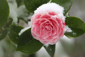 Qué hacer para cuidar un jardín en invierno