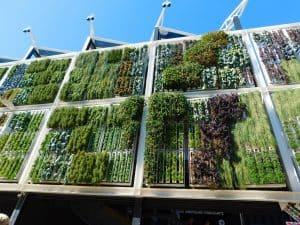 jardín vertical imagenes