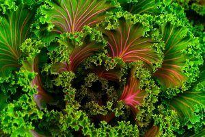 Riego de la Kale