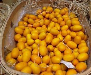 ¿Cómo preparar la tierra para el cultivo de kumquats?