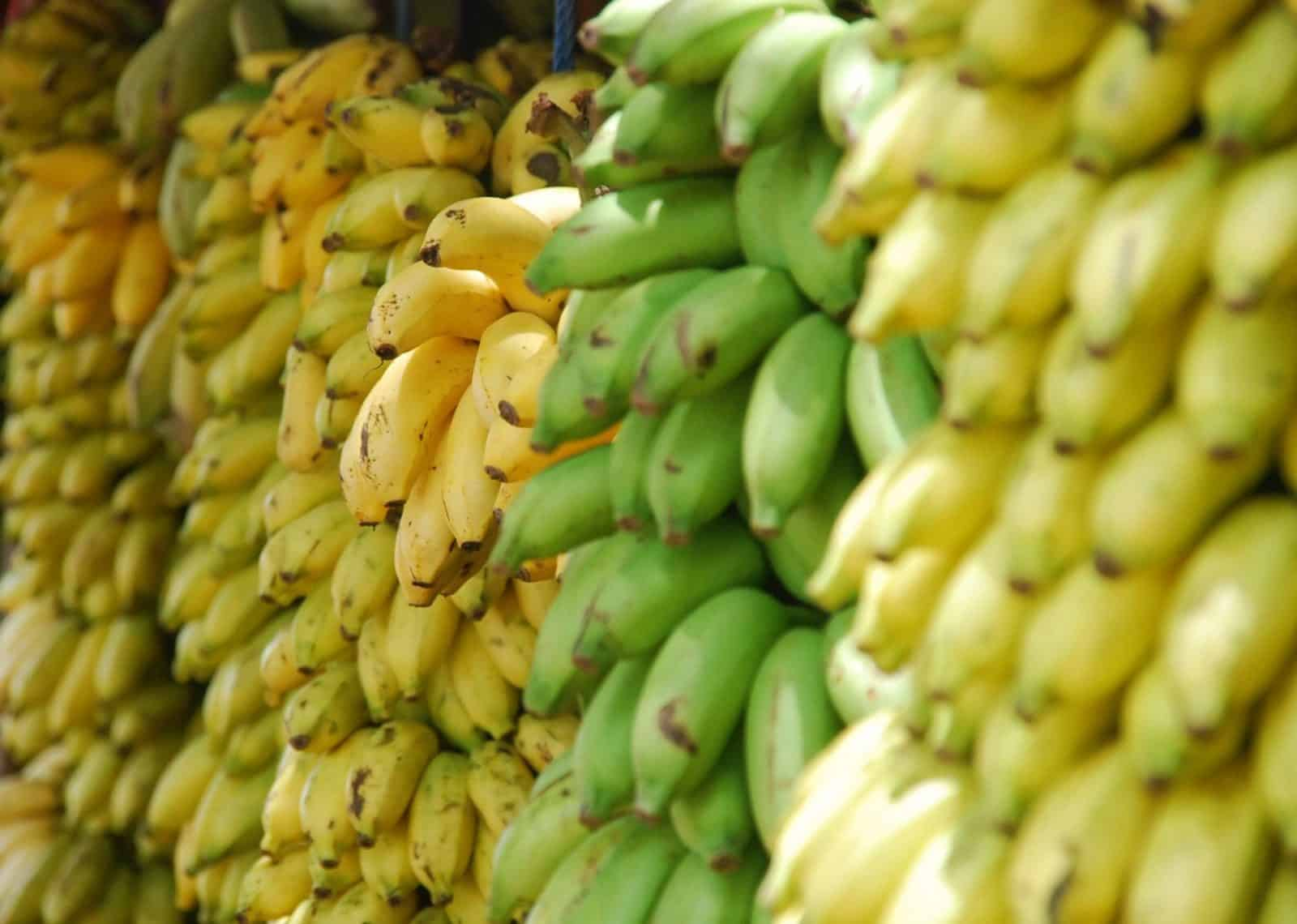 pieles de plátano sembrar tomates