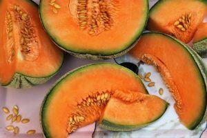 Plagas y enfermedades del melón