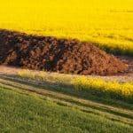 El Estiércol: ¿Qué es y Cómo Aplicarlo en tu Huerto o en la Agricultura?