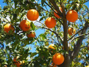 Riego del Naranjo