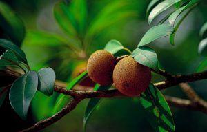 Cómo podemos detectar la falta de riego en los frutales