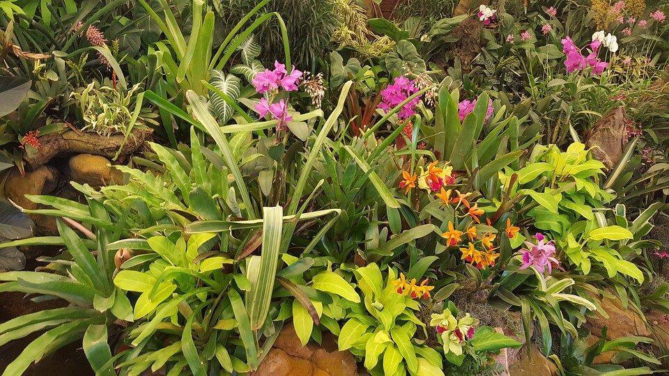 sembrar orquídeas