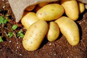 como abonar la patata