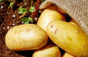 Plagas y enfermedades de la patata