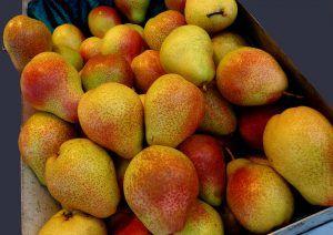 La cosecha de las peras