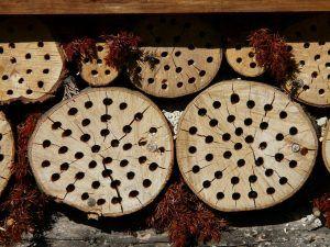 ¿Cuáles son los principios de diseño de la permacultura?