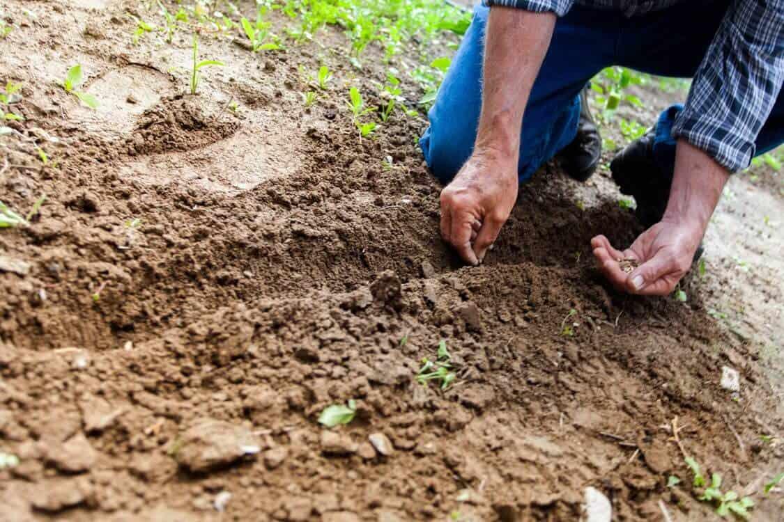 sembrar semillas paso a paso