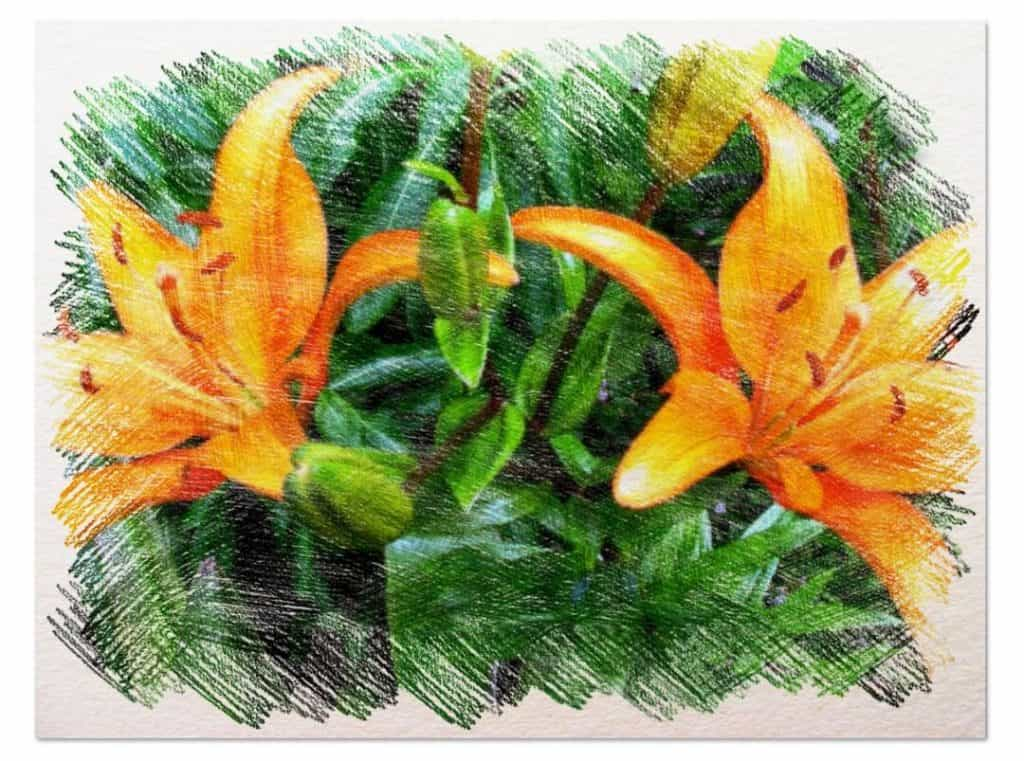 plantar azucenas en el huerto