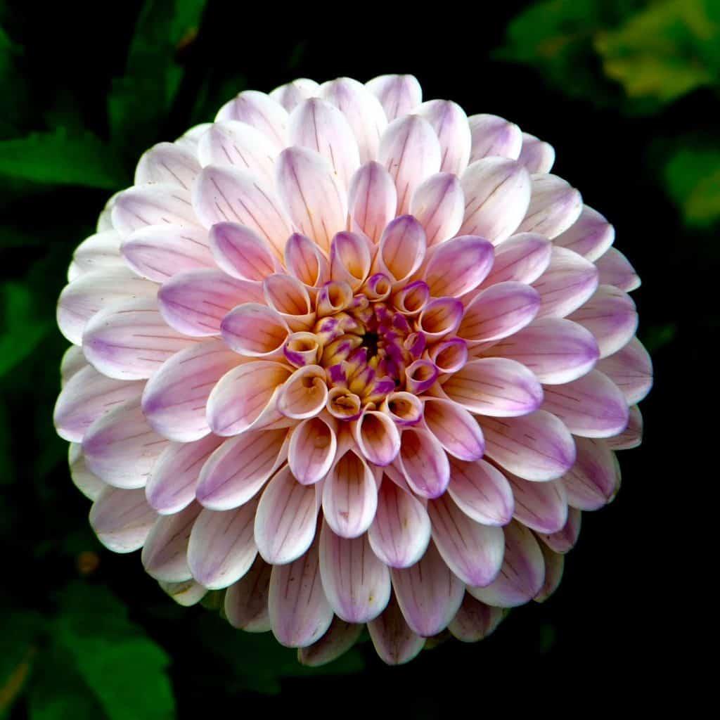 plantar flores 2 transplante