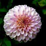 Plantas de Interior: [12 Ejemplos] + Cultivo y Cuidados