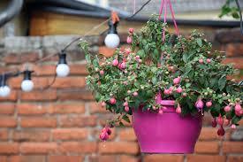 plantas colgantes 1