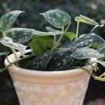 Plantas de Interior [32 Ejemplos Fantásticos]: Cultivo y Cuidados
