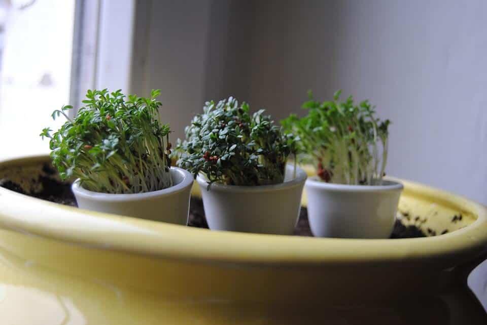 plantas de interior sembrar
