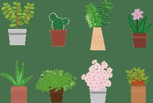 Tipos de plantas de Interior para Disfrutar en Casa