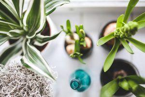¿Qué cuidados necesita una planta de interior?