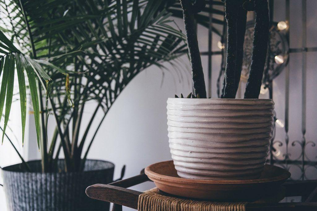 Por qué se mueren mis plantas de interior