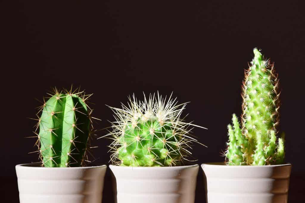 plantas de interior luz
