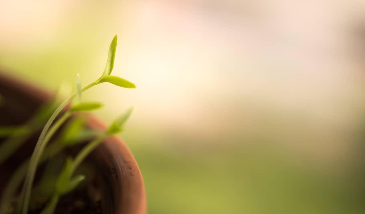 ¿Qué son las plantas de rápido crecimiento?
