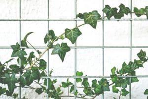 Significado de las plantas trepadoras